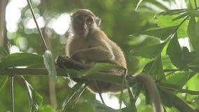 De zitting van de aap op een tak