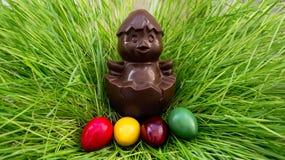 De zitting van de chocoladekip op een nest van gras met kleurrijke eieren Stock Foto's