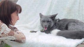De zitting van de de voshond van vrouwenhorloges op witte deken, die na gang rusten stock footage