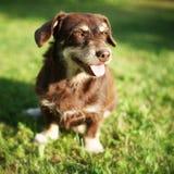 De zitting van de hond Royalty-vrije Stock Afbeelding