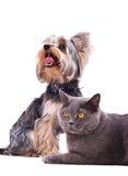 De zitting van de hond en van de kat naast royalty-vrije stock afbeeldingen