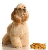 De zitting van de hond met hondbeenderen Stock Foto
