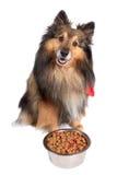 De zitting van de hond met voedselkom stock foto