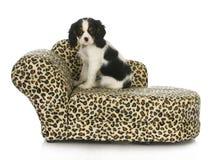 De zitting van de hond op een hondbed stock afbeelding