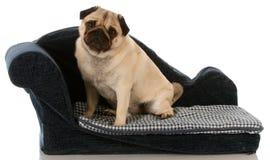 De zitting van de hond op hondbed royalty-vrije stock fotografie