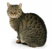 De zitting van de kat die op wit wordt geïsoleerdj royalty-vrije stock foto