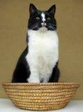De zitting van de kat in een mand Stock Foto's