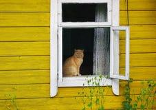 De zitting van de kat op een venstervensterbank Stock Foto's
