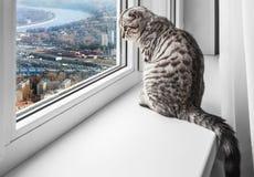 De zitting van de kat op een venstervensterbank Royalty-vrije Stock Afbeeldingen