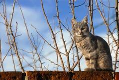 De zitting van de kat op muur Stock Afbeeldingen