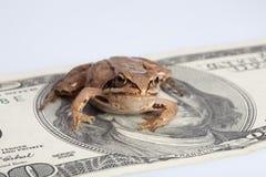 De zitting van de kikker op de dollar Royalty-vrije Stock Foto