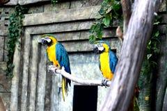De zitting van de papegaaivogel op de tak Royalty-vrije Stock Foto