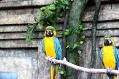 De zitting van de papegaaivogel op de tak Royalty-vrije Stock Fotografie