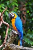 De zitting van de papegaaivogel op de toppositie stock fotografie