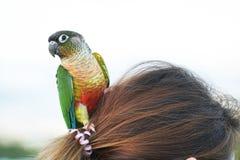 De zitting van de papegaaivogel op hoofdvrouwen Stock Foto's