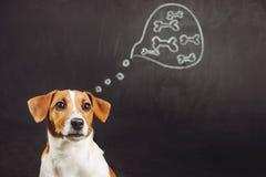 De zitting van de puppyhond en het dromen van natuurvoeding in een gedachte bubb stock afbeelding