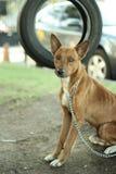 De zitting van de straathond Stock Foto's