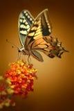 De zitting van de vlinder op een bloem Stock Afbeeldingen