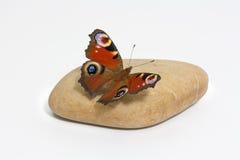 De zitting van de vlinder op een steen Stock Foto's