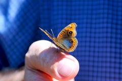 De zitting van de vlinder op vinger Stock Fotografie