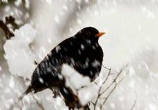 De zitting van de vogel op een snow-covered tak. Royalty-vrije Stock Foto's
