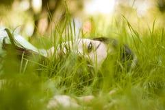 De zitting van de vrouw in gras Stock Foto's