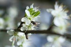 De zitting van het insect op een bloem Royalty-vrije Stock Foto's