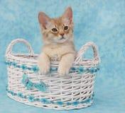 De zitting van het katje in een mand Royalty-vrije Stock Afbeeldingen