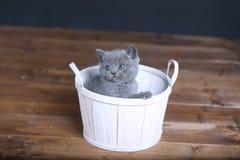 De zitting van het katje in mand royalty-vrije stock fotografie