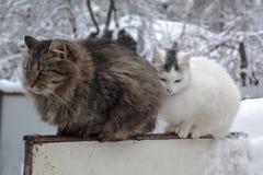 De zitting van het kattenpaar op de omheining in wintergarden royalty-vrije stock afbeeldingen