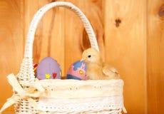 De zitting van het Kuiken van Pasen in een mand Royalty-vrije Stock Foto's