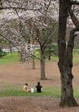 De zitting van het paar op het gras Royalty-vrije Stock Foto's