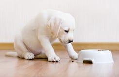 De zitting van het puppy dichtbij zijn kom met voedsel royalty-vrije stock foto
