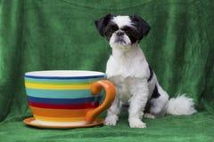 De zitting van het puppy door reusachtige mok Royalty-vrije Stock Foto's