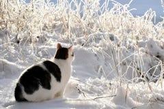 De zitting van de kat in de sneeuw stock afbeelding