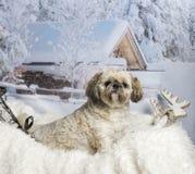 De zitting van Lhasaapso op bontdeken in de winterlandschap Royalty-vrije Stock Afbeeldingen
