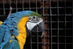 De zitting van de papegaaivogel op het net royalty-vrije stock foto