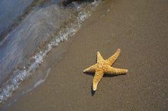 De zitting van Seastar in oceaan Stock Foto's