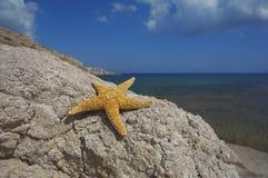 De zitting van Seastar op een rots Stock Afbeelding