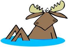De zitting van stierenamerikaanse elanden in wat water Stock Fotografie