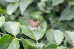 De zitting van de vlinder op het blad stock foto