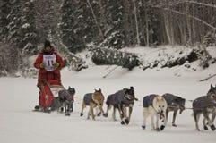 De Zoektocht van Yukon - Lans Mackey Stock Foto