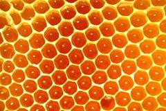 De zoete achtergrond van de honingskam Stock Foto's