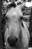 De zoete blik van het paard royalty-vrije stock foto's