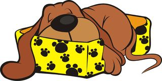 De zoete Slaap van het Puppy Stock Afbeelding