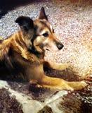 De zoete zij-wolf wacht op voor uw knuffels royalty-vrije stock fotografie