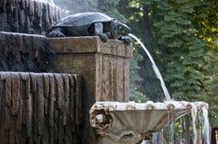 De zoetwater Fontein van de Schildpad stock afbeeldingen