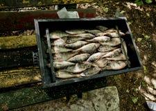 De zoetwatervissen zoals voorn en toppositie worden gestapeld in het rookhuis stock afbeeldingen