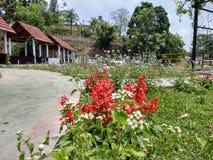 De zomer in Assam stock afbeelding