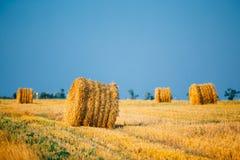 De zomer Autumn Rural Landscape Field Meadow met Stock Afbeelding